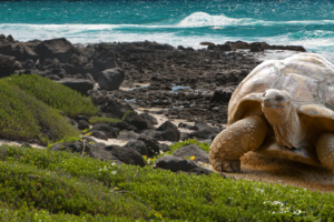 Natural Wonders of Galapagos