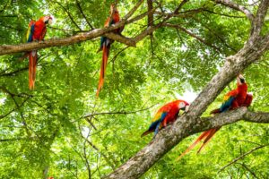 Ecotour & Volunteer Services in Costa Rica