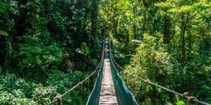 Hanging Bridges (Puentes Colgantes Del Arenal)